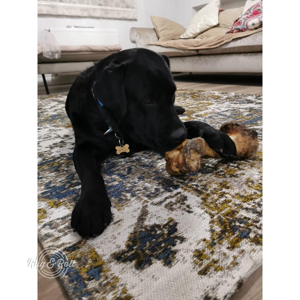 Rug&Roll - Vásárlói képek: kutyabarát szőnyeg